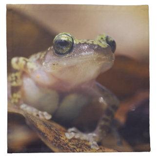 Cliff Chirping Frog, Eleutherodactylus Napkin