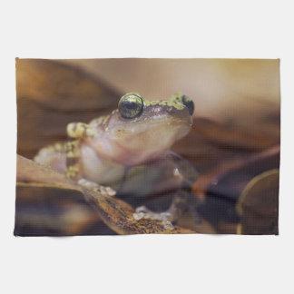 Cliff Chirping Frog, Eleutherodactylus Tea Towel
