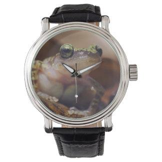 Cliff Chirping Frog, Eleutherodactylus Watch