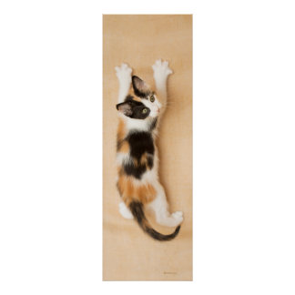 Climbing Calico Kitten Poster