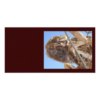 Climbing Chameleon Photo Greeting Card