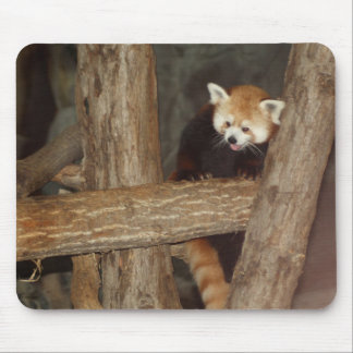 Climbing Panda Mousepad