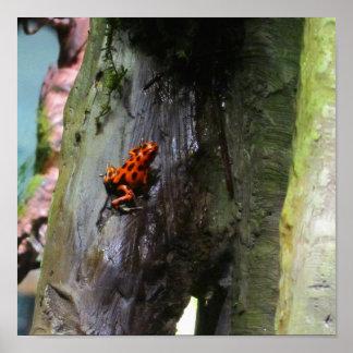 Climbing Red Dart Frog Print