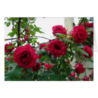 Climbing Red Roses Greeting Card