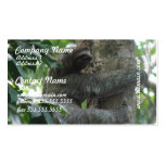 Climbing Sloth  Business Cards