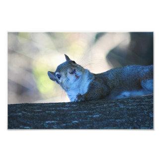 Climbing Squirrel Photo Print