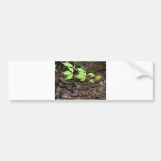 Climbing Vine Bumper Sticker