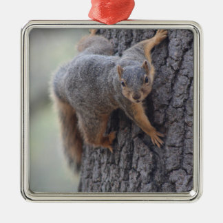 Clinging Squirrel Christmas Ornament