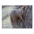Clinging Squirrel Postcard