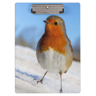 Clipboard with European robin in winter snow