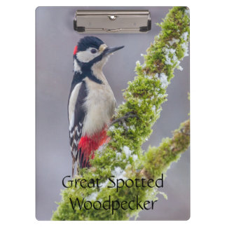 Clipboard with Great Spotted Woodpecker