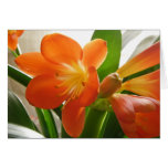 Clivia #1 greeting cards