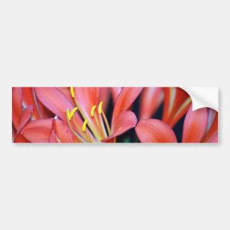 Clivia lily flower and origin bumper stickers
