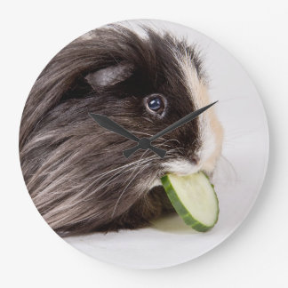 Clock cute guinea pig eating cucumber