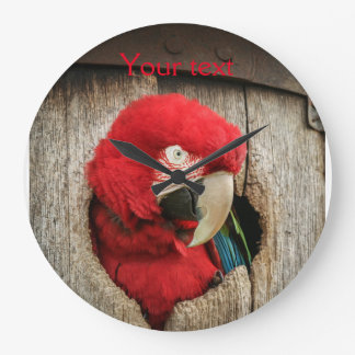 Clock with green wing macaw parrot in barrel