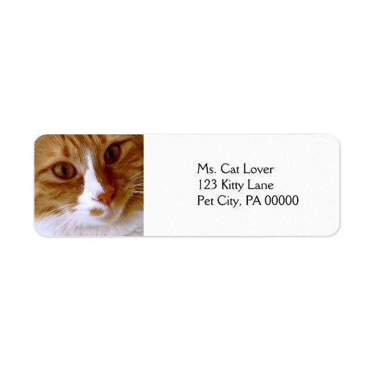 Close Up Cat Return Address Labels