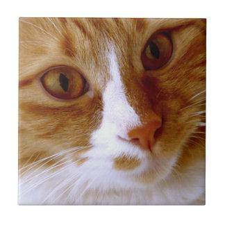 Close Up Cat Tile