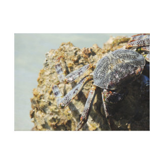 Close up Crab Gallery Wrapped Canvas