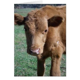 Close-up Cute Calf Greeting Card