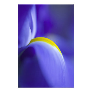 Close-up detail of a Blue Flag iris. Photo Print