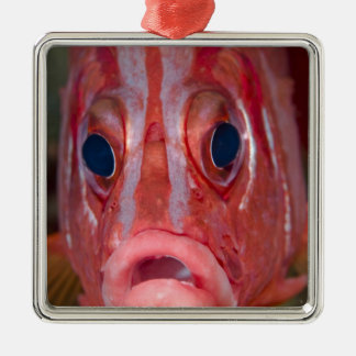 Close-up frontal view of colorful squirrelfish christmas ornament