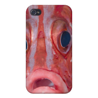 Close-up frontal view of colorful squirrelfish iPhone 4 case