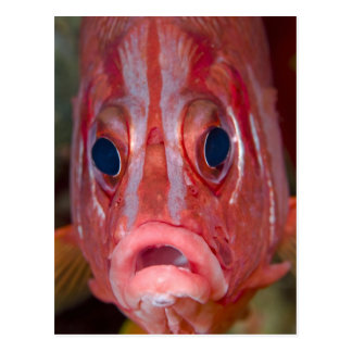 Close-up frontal view of colorful squirrelfish postcard