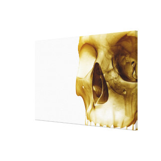 Close up frontal view of the brain inside a skull canvas print