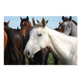 Close-up herd of horses. photo print
