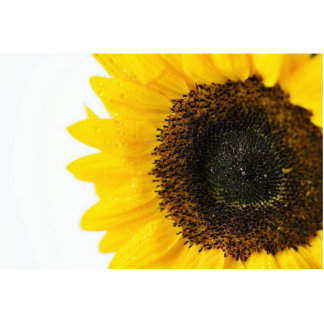 Close Up Image Of Sunflower Standing Photo Sculpture