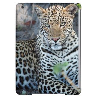 Close up leopard portrait sitting