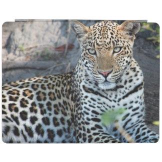 Close up leopard portrait sitting iPad cover