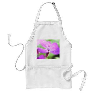 Close Up - Money Plant Flower Standard Apron
