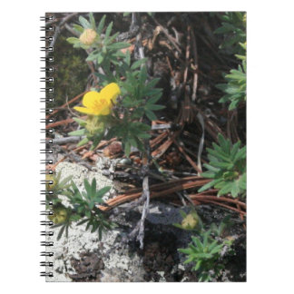 Close Up Mountain Flowers Notebooks