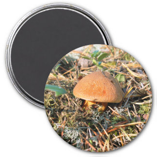 close up mushroom in a forest magnet