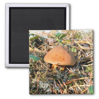 close up mushroom in natural environment magnet