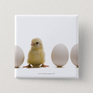 Close-up of a baby chick with three eggs 15 cm square badge