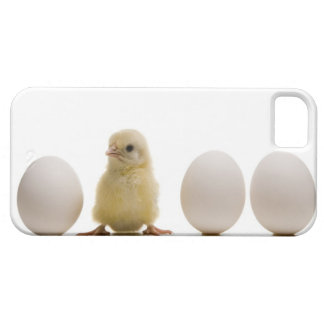 Close-up of a baby chick with three eggs iPhone 5 case