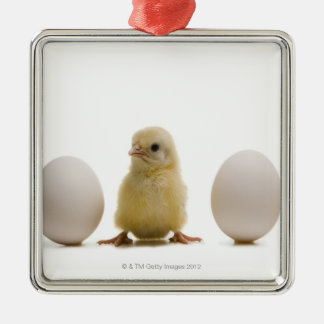 Close-up of a baby chick with three eggs Silver-Colored square decoration