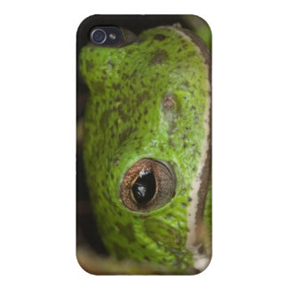 Close-up of a Barking treefrog on limb resting iPhone 4/4S Cases