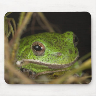 Close-up of a Barking treefrog on limb resting Mouse Mat