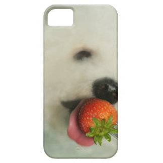 Close-up of a Bichon Frise eating a strawberry Case For The iPhone 5