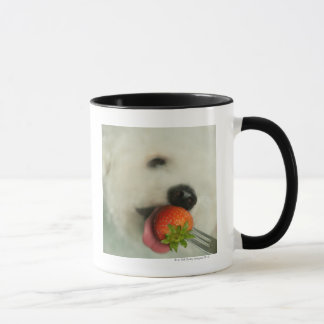 Close-up of a Bichon Frise eating a strawberry Mug