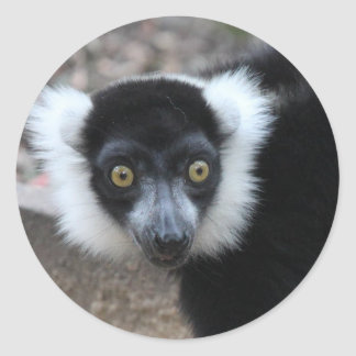 Close up of a Black and White Ruffed Lemur Classic Round Sticker