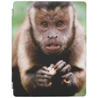 Close-up of a black-capped capuchin monkey iPad cover