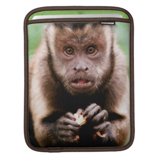 Close-up of a black-capped capuchin monkey iPad sleeve