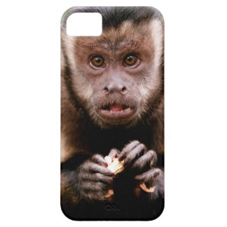 Close-up of a black-capped capuchin monkey iPhone 5 cases