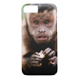 Close-up of a black-capped capuchin monkey iPhone 8/7 case