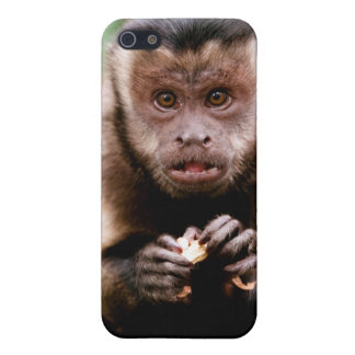 Close-up of a black-capped capuchin monkey cover for iPhone 5/5S