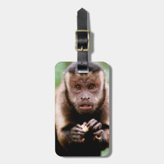Close-up of a black-capped capuchin monkey luggage tag